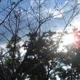 横武クリーク公園1