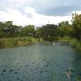横武クリーク公園2