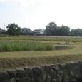 金立公園コスモス園2