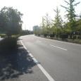 佐賀東部中核工業団地の道