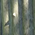 トム・ソーヤの森3