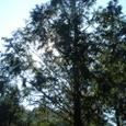 トム・ソーヤの森4
