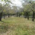 神野公園4
