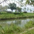 多布施川2