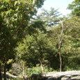 脊振山の森