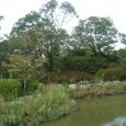 蓮池公園5