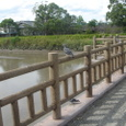 蓮池公園の鳩