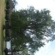 蓮池公園の木